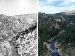 The view along the South Platte River in the Pike National Forest, in 1903 and 2012. When wildfires burn in dense forests today they are often hotter and can destroy more trees.